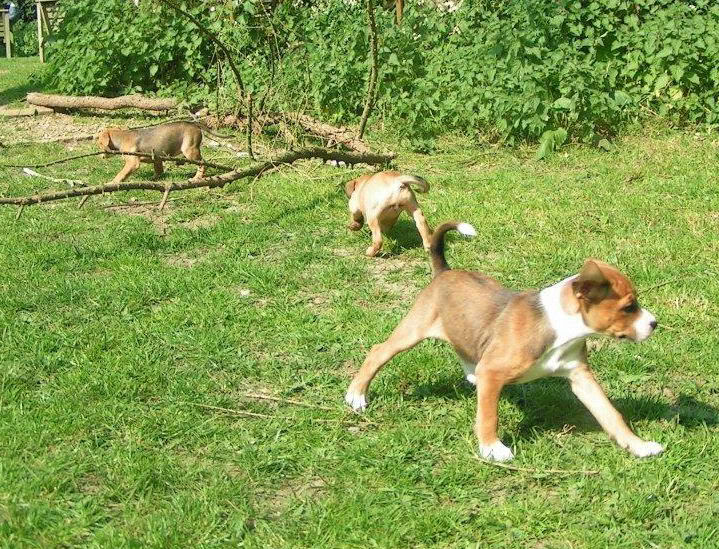 Cross breed pups (not large breed) 29 days old in Kent 7df81f76