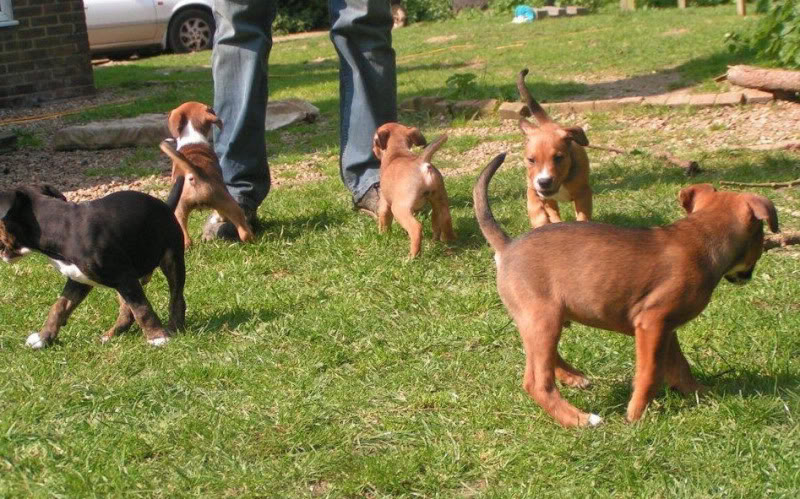 Cross breed pups (not large breed) 29 days old in Kent 7fd7f13c