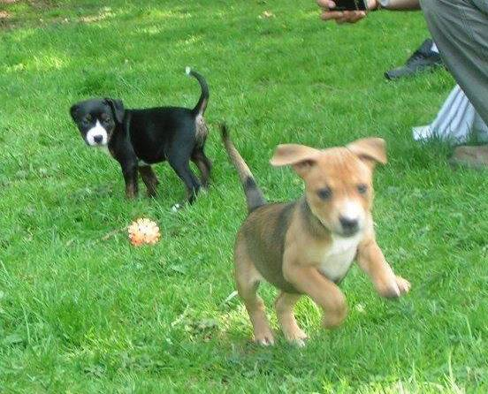 Cross breed pups (not large breed) 29 days old in Kent 83e99383