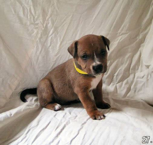 Cross breed pups (not large breed) 29 days old in Kent 94df76d7