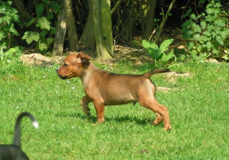 Cross breed pups (not large breed) 29 days old in Kent 95c3531e