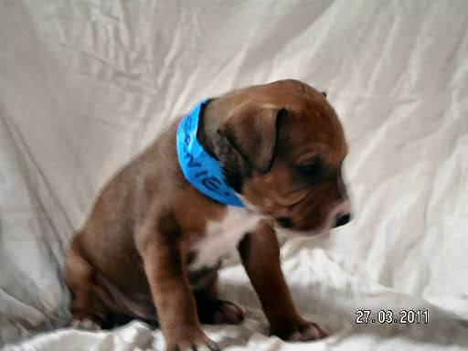 Cross breed pups (not large breed) 29 days old in Kent 9cc93681