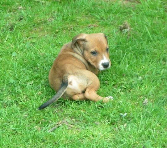 Cross breed pups (not large breed) 29 days old in Kent Aaf14ac6