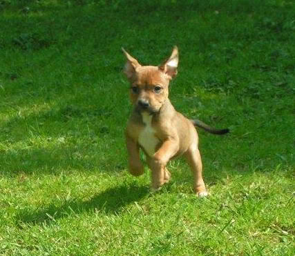 Cross breed pups (not large breed) 29 days old in Kent Ac6b805c