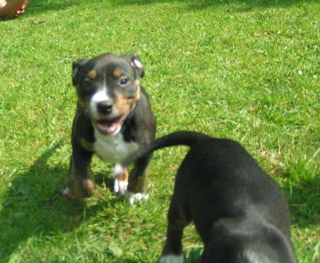 Cross breed pups (not large breed) 29 days old in Kent D6a63351