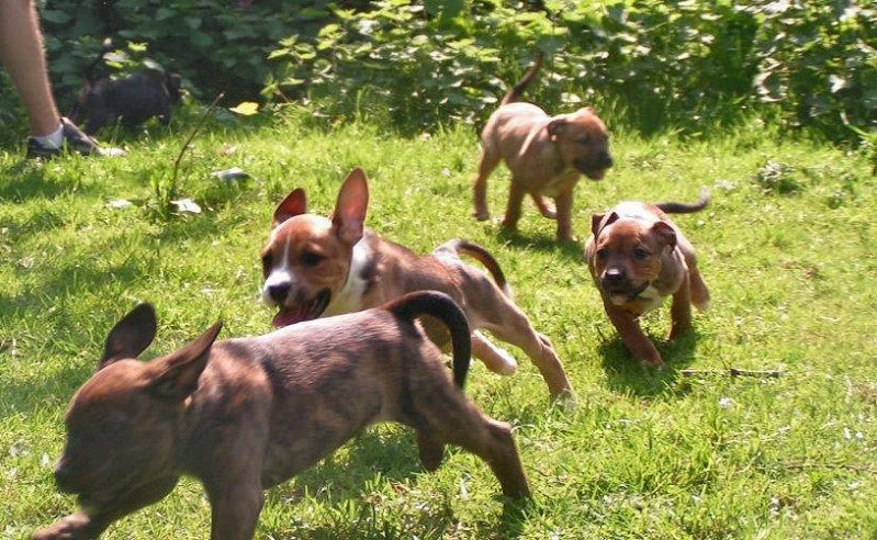 Cross breed pups (not large breed) 29 days old in Kent E82c2b9b