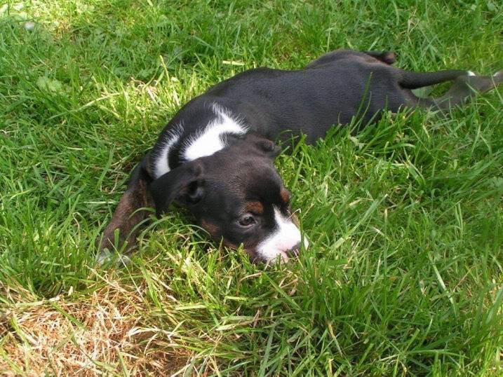 Cross breed pups (not large breed) 29 days old in Kent F2f35c5d