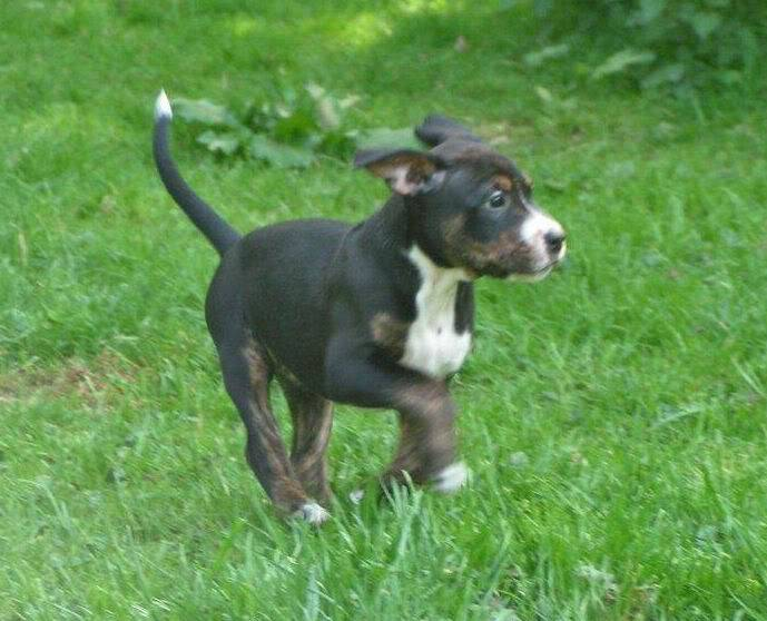 Cross breed pups (not large breed) 29 days old in Kent Fb6f4ae5