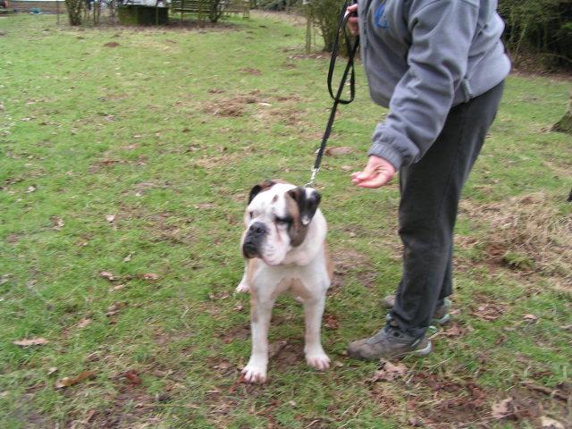 Dave - Bulldog 002_zpsbd0360c4