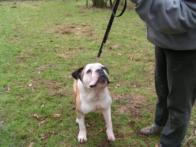 Dave - Bulldog 006_zps4af06cd0