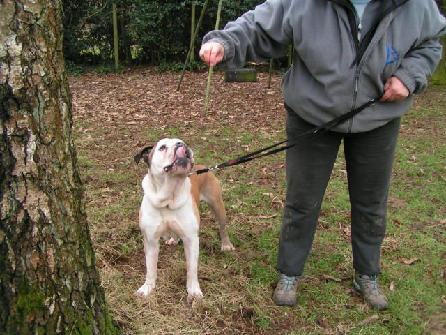 Dave - Bulldog 011_zps4b56f311