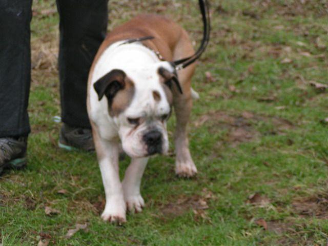 Dave - Bulldog 018_zps73294ea0