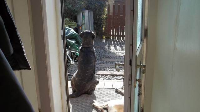 Max - English Mastiff -  - Page 3 100_0576_zps3cc790ce