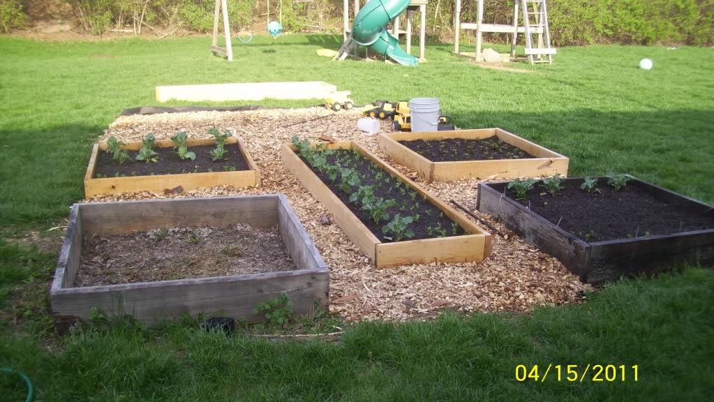 This city slicker's 2011 spring garden 100_0857