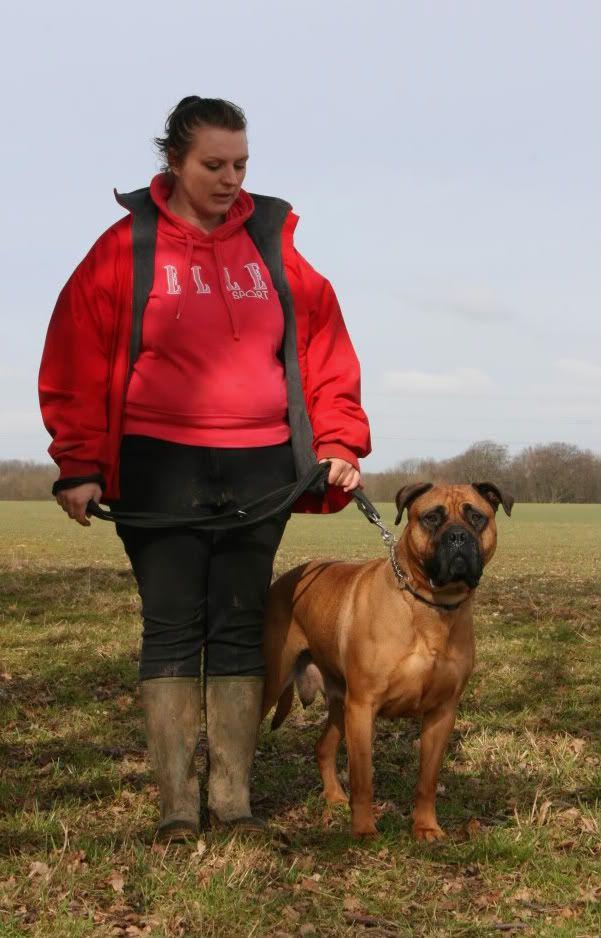 CARMEN 3-4 years old Bullmastiff with LBDR IMG_6695