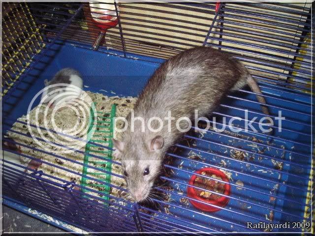 Les rats IMG_0170