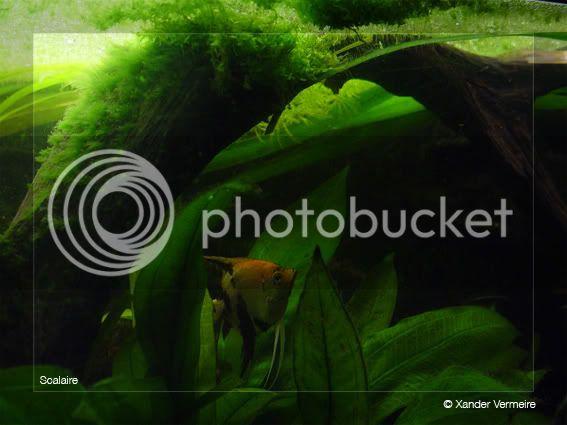 aquarium d'eXecoV - Page 8 Ange1