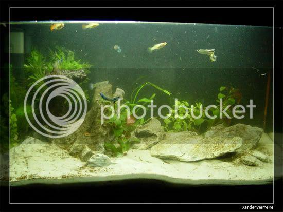 aquarium d'eXecoV - Page 11 Aq1C