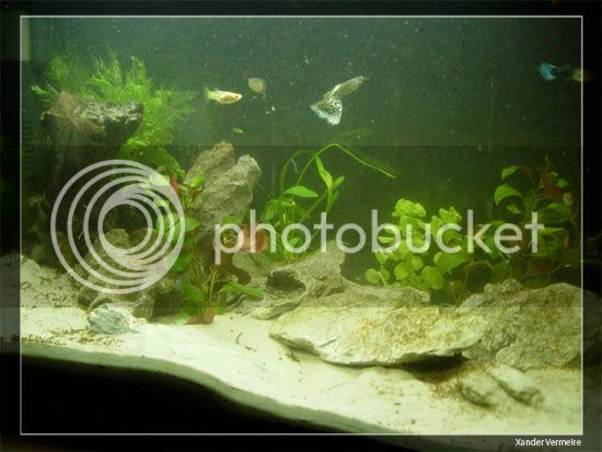 aquarium d'eXecoV - Page 11 Aq1D