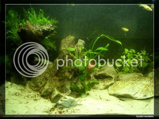 aquarium d'eXecoV - Page 11 Aq1b