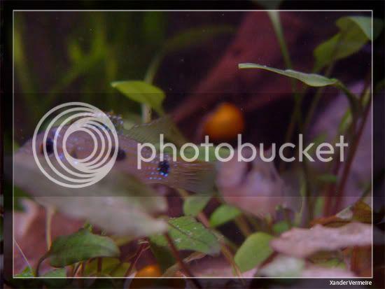 aquarium d'eXecoV - Page 11 Aq3
