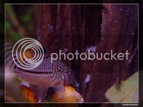 aquarium d'eXecoV - Page 11 Aq6