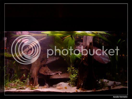 aquarium d'eXecoV - Page 11 Aq8