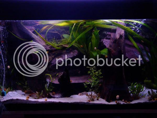 aquarium d'eXecoV - Page 11 Aqua1c