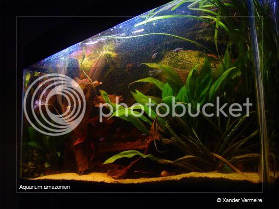 aquarium d'eXecoV - Page 4 Aquarium