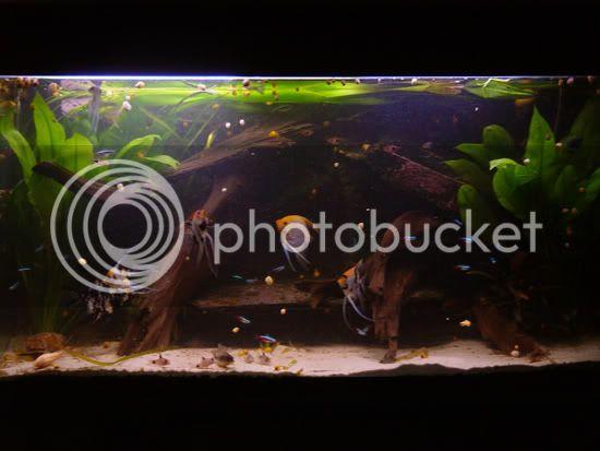 aquarium d'eXecoV - Page 8 Aquarium1