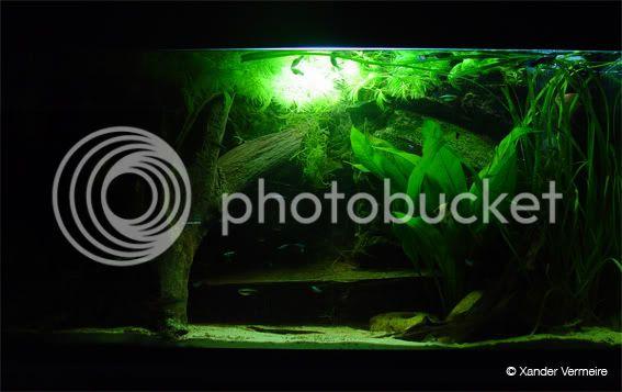aquarium d'eXecoV - Page 2 Aquasoir