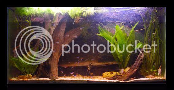 aquarium d'eXecoV - Page 3 Aquatotaal