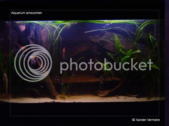 aquarium d'eXecoV - Page 5 Aquatotal