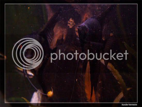 aquarium d'eXecoV - Page 10 Bigben