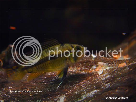 aquarium d'eXecoV - Page 3 Caca6