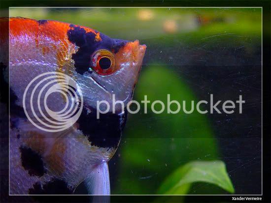 aquarium d'eXecoV - Page 8 Fish1