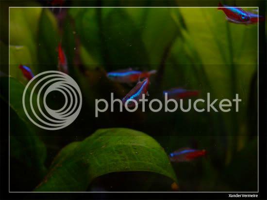 aquarium d'eXecoV - Page 8 Fish2