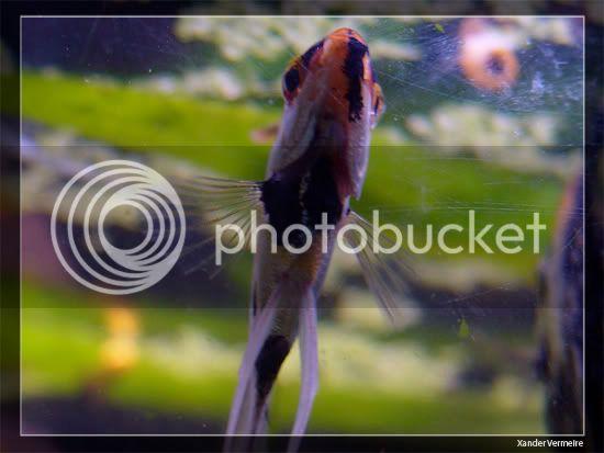aquarium d'eXecoV - Page 8 Fish3