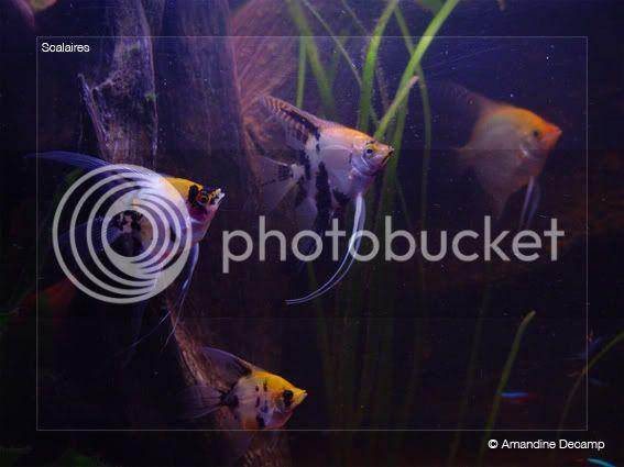 aquarium d'eXecoV - Page 5 Maanvis1
