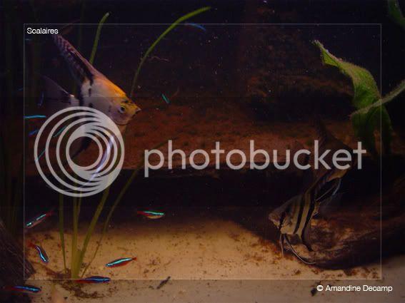 aquarium d'eXecoV - Page 5 Maanvis2