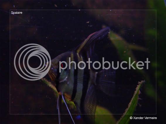 aquarium d'eXecoV - Page 5 Maanvis3
