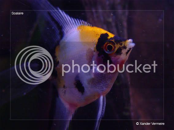 aquarium d'eXecoV - Page 5 Maanvis4