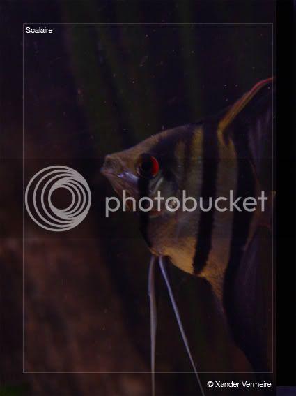 aquarium d'eXecoV - Page 5 Maanvis5