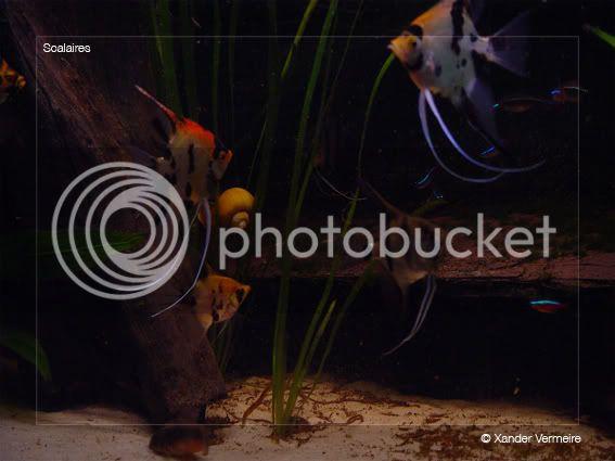 aquarium d'eXecoV - Page 5 Moon3