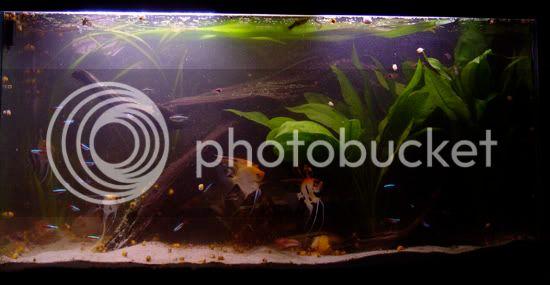 aquarium d'eXecoV - Page 8 Nieuwaquatotaal