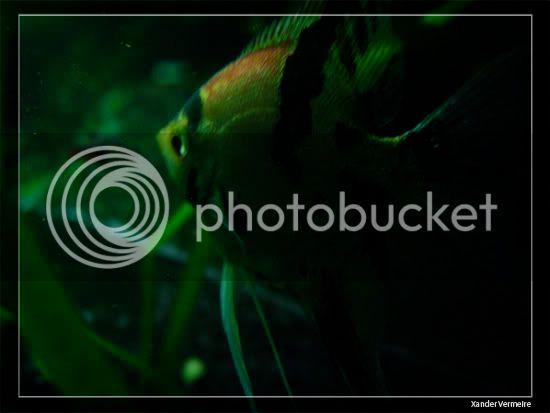 aquarium d'eXecoV - Page 8 Nuit1
