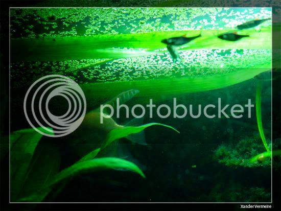 aquarium d'eXecoV - Page 8 Nuit3