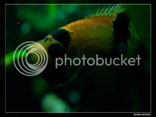 aquarium d'eXecoV - Page 8 Nuit4