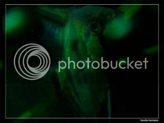 aquarium d'eXecoV - Page 8 Nuit5