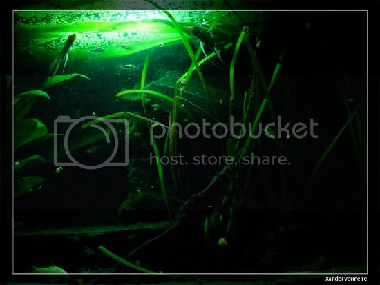 aquarium d'eXecoV - Page 8 Nuit7